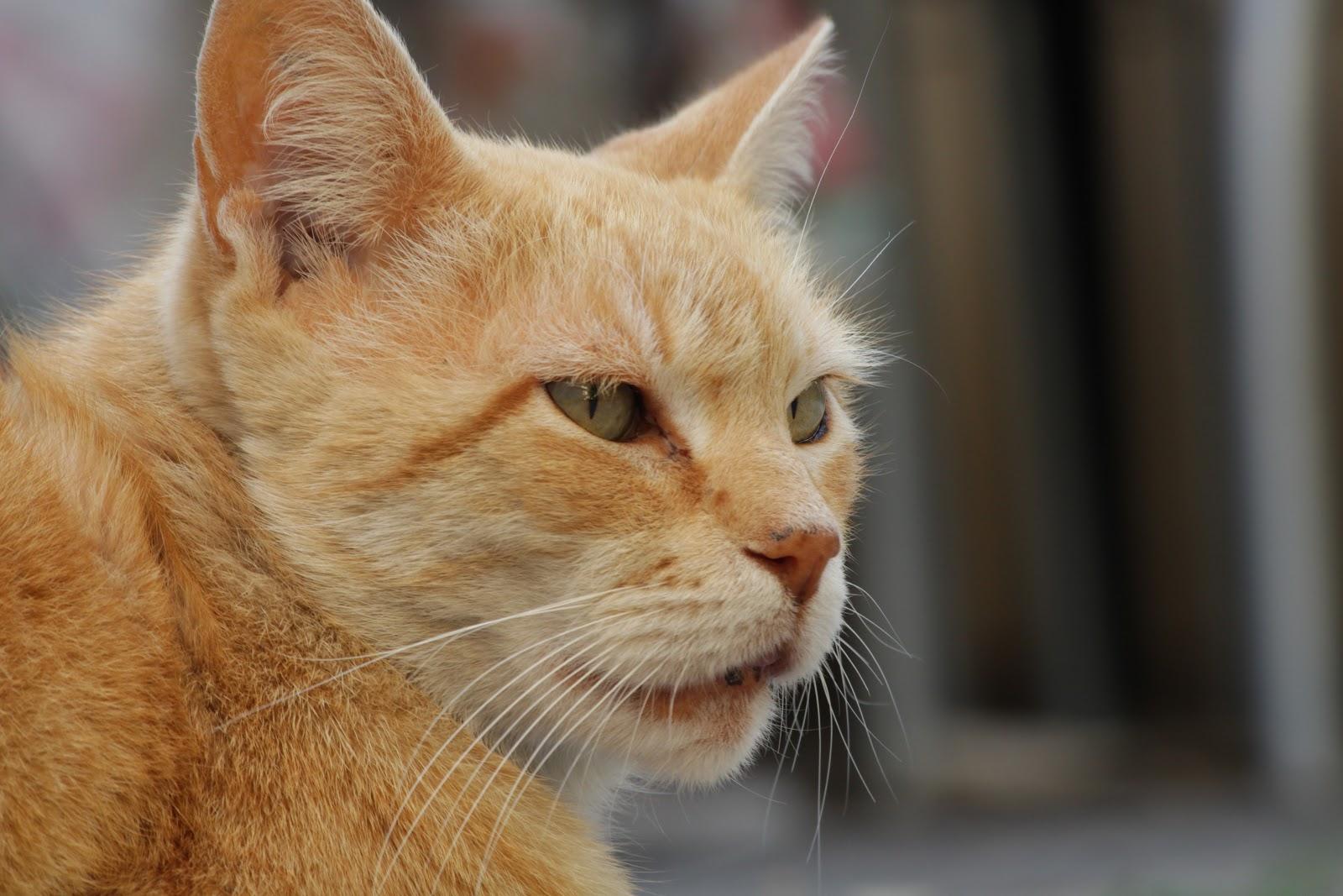 Mơ thấy mèo anh em nên đánh con gì để có thể cập bến một cách an toàn?