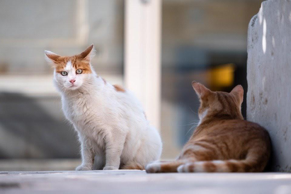 Mơ thấy hai con mèo anh em lên đánh con gì để có thể cập bến an toàn?